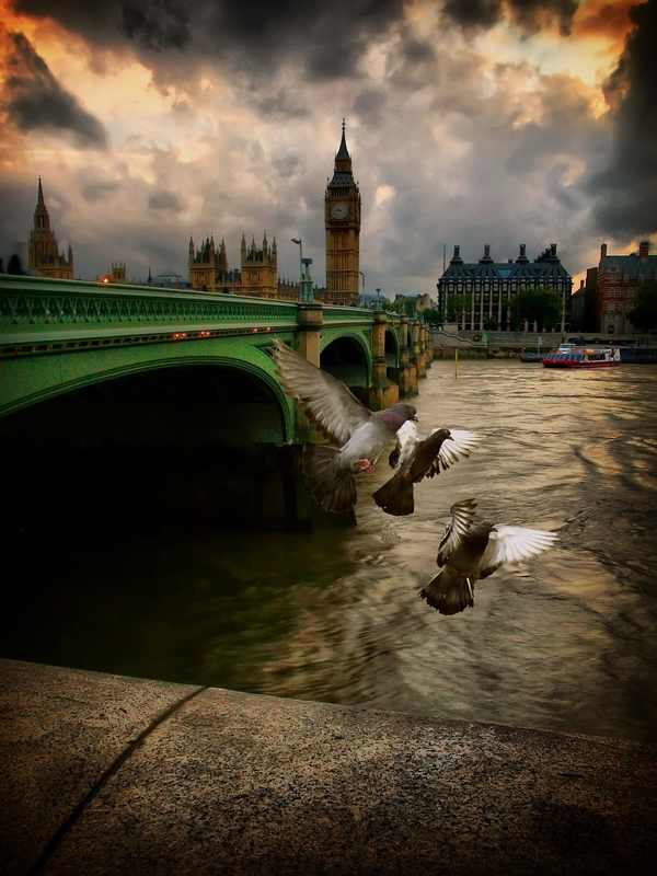 London birds | bridge, hdr, wharf, London