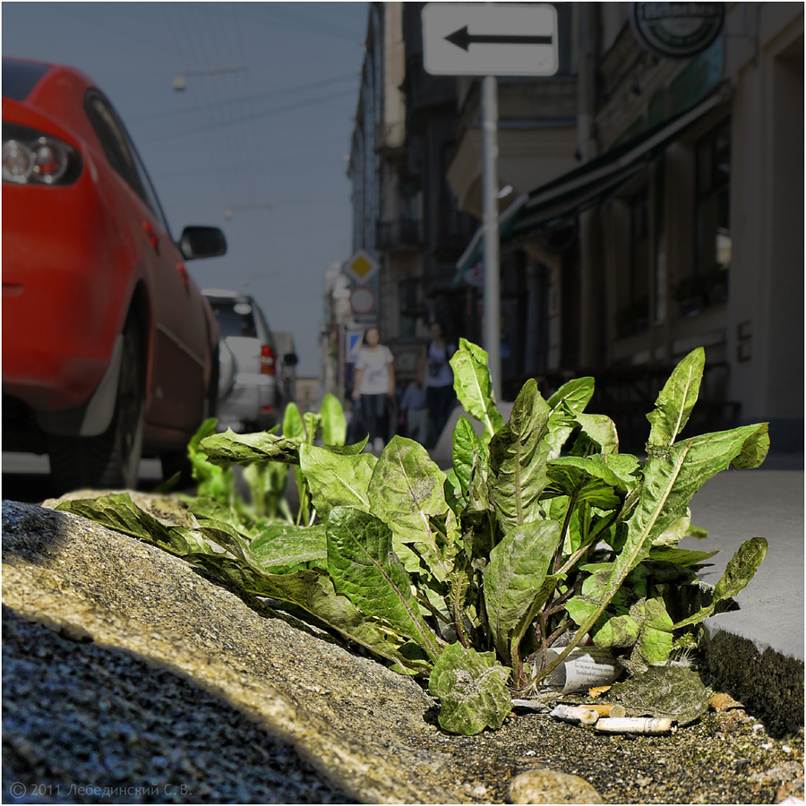 Plant grows through asphalt