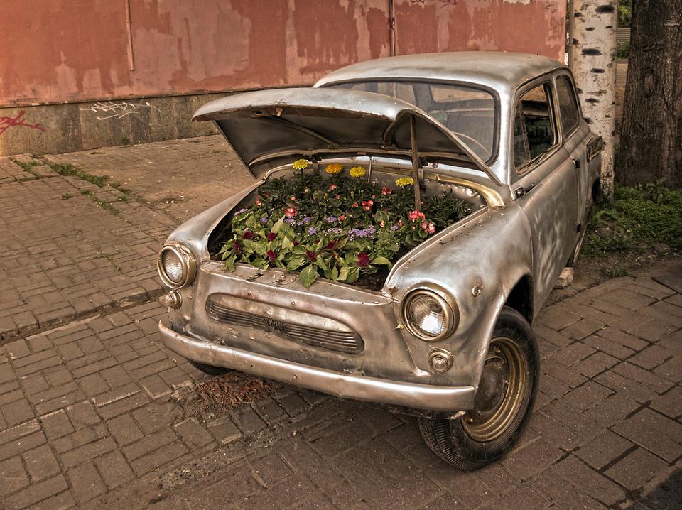 Zaz 965 in flowers