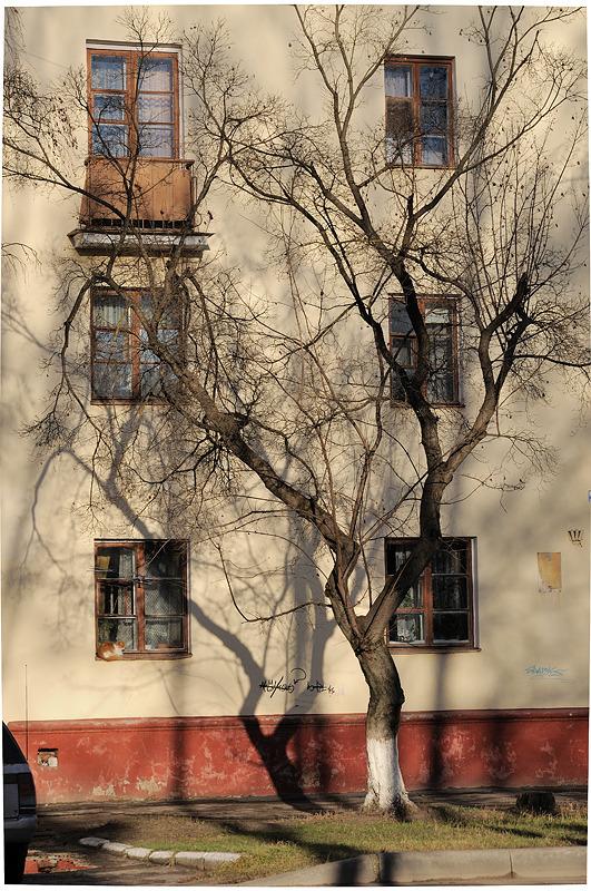 Tree near an old house